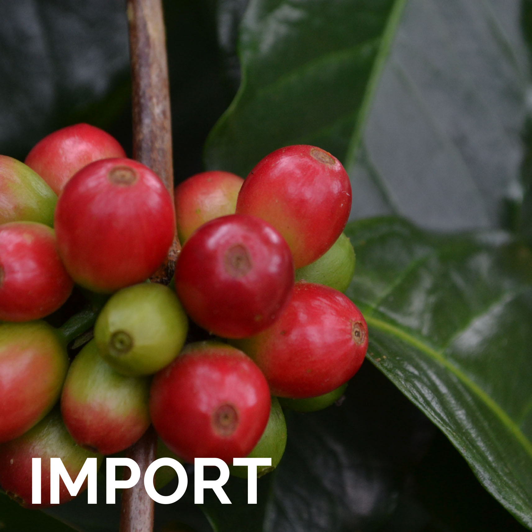 Hungry Bird Coffee product catalogue import